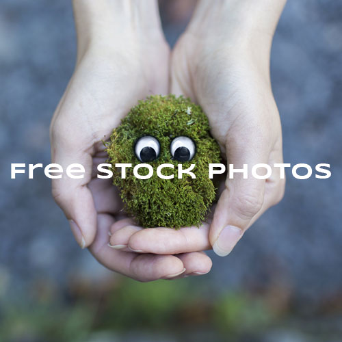Free Stock Photos